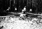 Clearing Campsite, Camp Siskiwit, ca. 1938: [NVIC: 30-234], ISRO Archives.