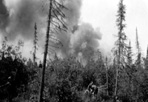 Fire Burning in Green Timber, 1936: [NVIC: 30-016], ISRO Archives.