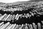 Mead Logging Operations, ca. 1935: Resource Management Records, ISRO Archives.